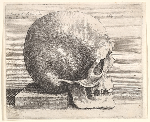 Right Profile of the Skull, after Leonardo