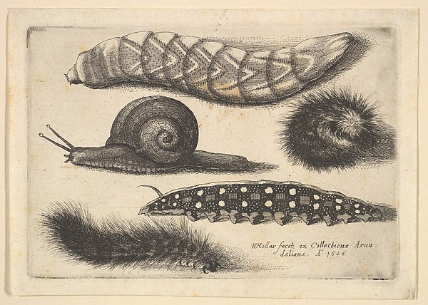 Four Caterpillars and a Snail, Butterflies and Insects, Muscarum scarabeorum