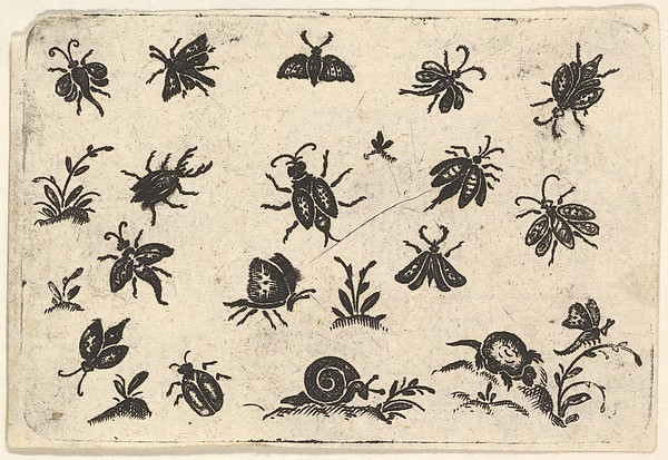 Fascinating Historical Picture of  with Small Motifs of Insects and Plants in 1596