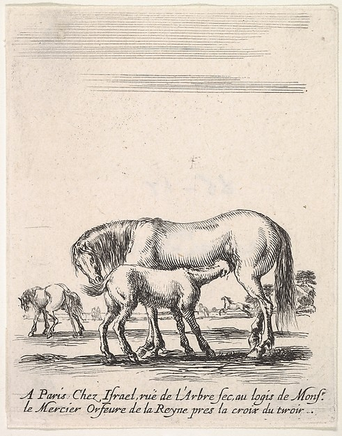 Mare suckling a foal in center, another foal urinating in back left, other horses in the background, from 'Various cavalry exercises' (Diverses exercices de cavalerie)