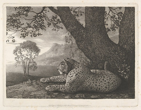 Fascinating Historical Picture of George Stubbs with A Tyger (A Recumbent Leopard by a Tree) on 5/1/1788