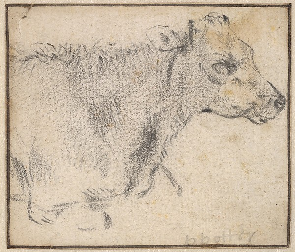 Study of a lying cow