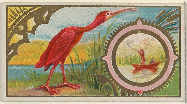 Scarlet Ibis, from the Game Birds series (N13) for Allen & Ginter Cigarettes Brands