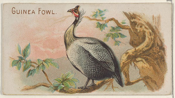 Guinea Fowl, from the Prize and Game Chickens series (N20) for Allen & Ginter Cigarettes