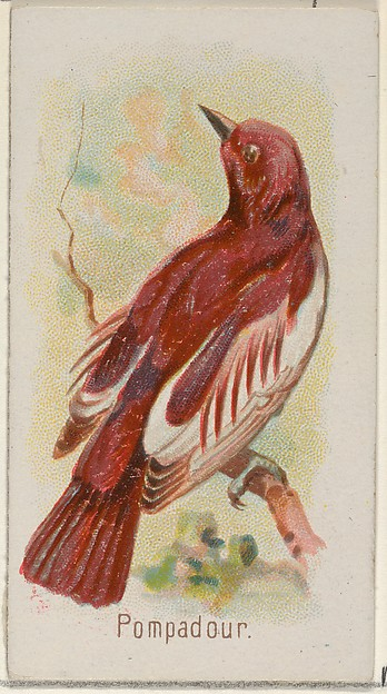 Pompadour, from the Song Birds of the World series (N23) for Allen & Ginter Cigarettes
