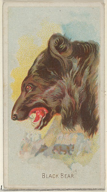 Black Bear, from the Wild Animals of the World series (N25) for Allen & Ginter Cigarettes