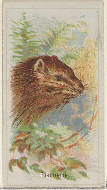 Porcupine, from the Wild Animals of the World series (N25) for Allen & Ginter Cigarettes