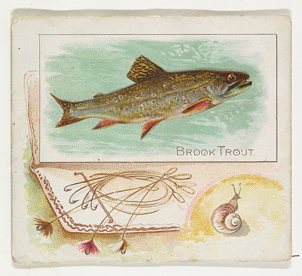 Brook Trout, from Fish from American Waters series (N39) for Allen & Ginter Cigarettes