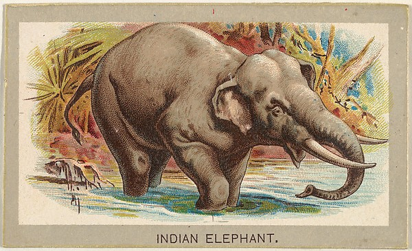 Indian Elephant, from the Animals of the World series (T180), issued by Abdul Cigarettes
