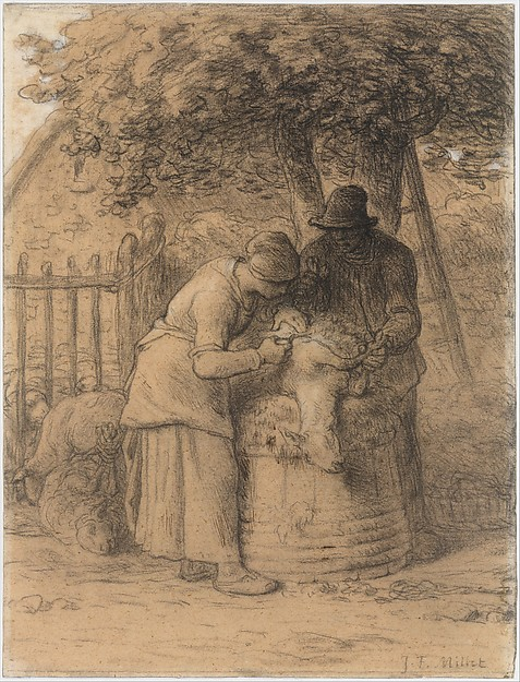 Sheepshearing Beneath a Tree