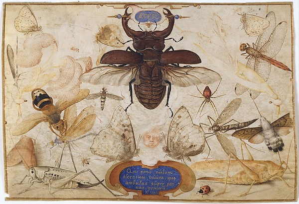 Insects and the Head of a Wind God