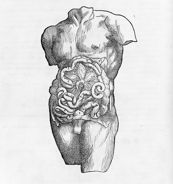 De humani corporis fabrica (Of the Structure of the Human Body)
