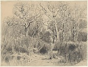 Trees in a Thicket