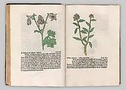 Herbarius - Gart der gesuntheit - Hortus sanitatis