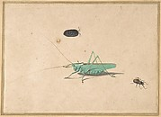 A Great Green Bush Cricket (Tettigorica viridissima Linneaeus), A Clioniona Spider, and a Beetle