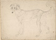Study of a Dog Facing Left