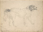 Study of a Dog Facing Right