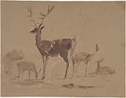 Stag and Its Young