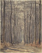 An Allée in the Woods