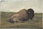 Bison Lying Down