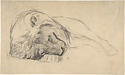 The Head of a Recumbent Lion