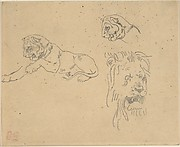 Three Studies of a Lion