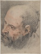 Head of a Bearded Man Looking Left