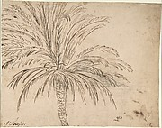 Study of a Palm Tree (recto); Mountain Landscape (verso)