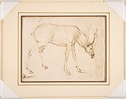 Studies of a Stag