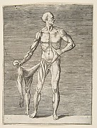 Man seen from the Front, holding the Skin of his right Arm and Leg in his right Hand