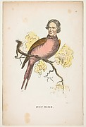 Sun Bird (James S. Wallace), from The Comic Natural History of the Human Race