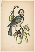 King Bird (Robert P. King and Alexander Baird), from The Comic Natural History of the Human Race