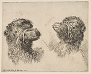 Two Camel Heads