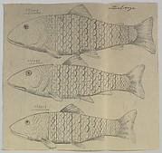 Design for Three Silver Fishes