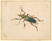 Green Beetle with Brown Legs