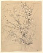 Study of a Tree Standing in Water in the Düsseldorf Hofgarten; verso: Studies of Plants