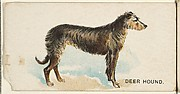 Deer Hound, from the Dogs of the World series for Old Judge Cigarettes
