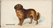 Berghund, from the Dogs of the World series for Old Judge Cigarettes