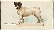 Fox Terrier, from the Dogs of the World series for Old Judge Cigarettes