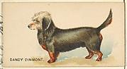 Dandy Dinmont, from the Dogs of the World series for Old Judge Cigarettes