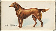 Irish Setter, from the Dogs of the World series for Old Judge Cigarettes