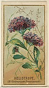 Heliotrope (Heliotropium Peruvianum), from the Flowers series for Old Judge Cigarettes