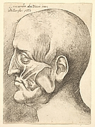 Facial Muscles, after Leonardo