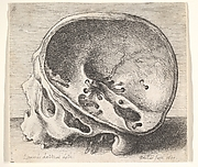 Inner Aspects of the Human Skull, after Leonardo