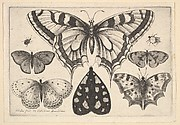 Five Butterflies, a Moth and Two Beetles