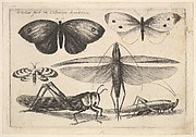 Six Insects, Butterflies and Insects, Muscarum scarabeorum