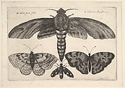 Moth and Three Butterflies, Butterflies and Insects, Muscarum scarabeorum