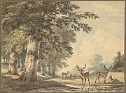 Deer under Beech Trees in Winter