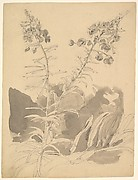 Study of a Willowherb; verso: Study of Two Cows