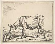 Cow, after Paulus Potter